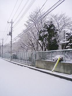 yuki-1